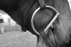 Esther_Fleischer_Still_Life_1_Bit_Horse