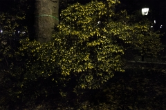 Yash Killa_Philadelphia_Night_Bush_Leaves_Greenery2