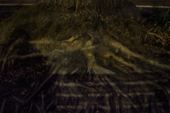 Yash Killa_Philadelphia_Night_Tree_Root_bench_Shadow2