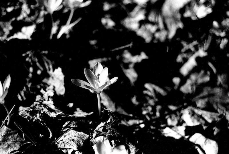 Aaron_Graybill_photography_merion_botanical_garden_spring_2021_flower