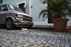 Alexis_Masino_UPenn_Tony_Ward_Old_San_Juan_Puerto_Rico_spring_break_vacation_photo_photography_island_cat_street_alley_van_chevrolet_chevy_abandoned_stray_plant_stones_cobblestones_color_animal
