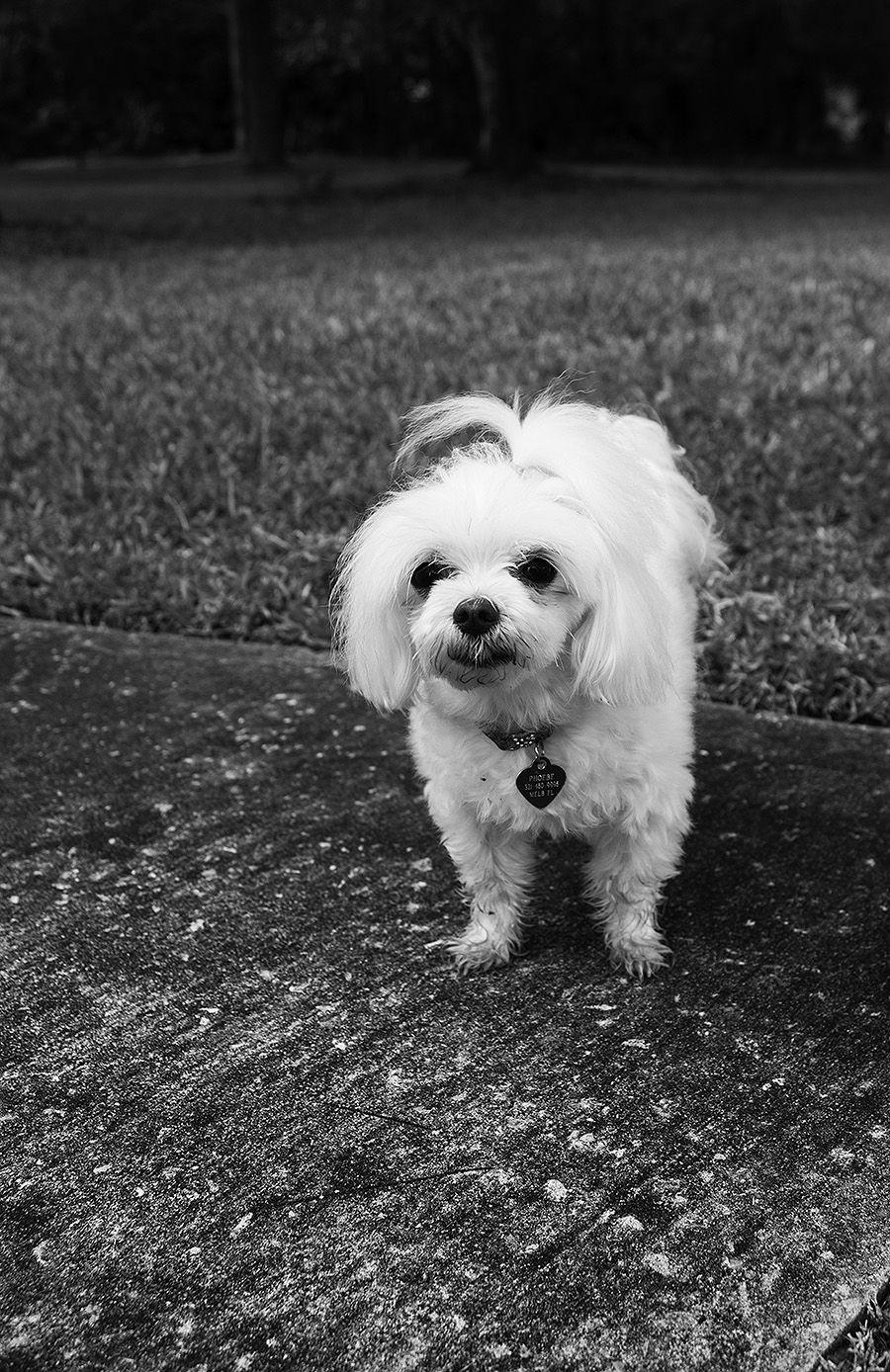 Anni_Liu_Photography_Individual_Project_8_Home_Dog_Phoebe_Liu