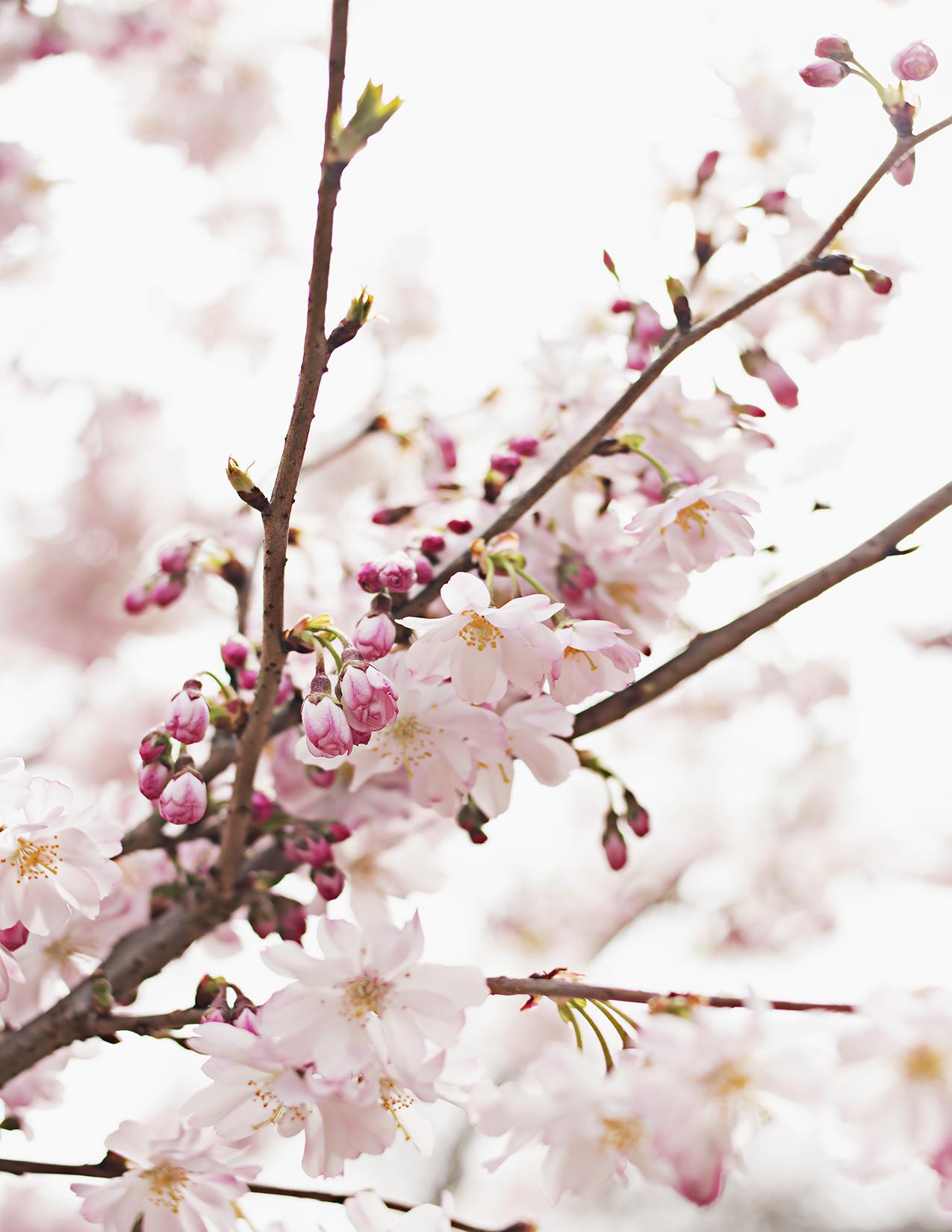 Eileen_Ko_Assignment 4_Light_Pink Flowers