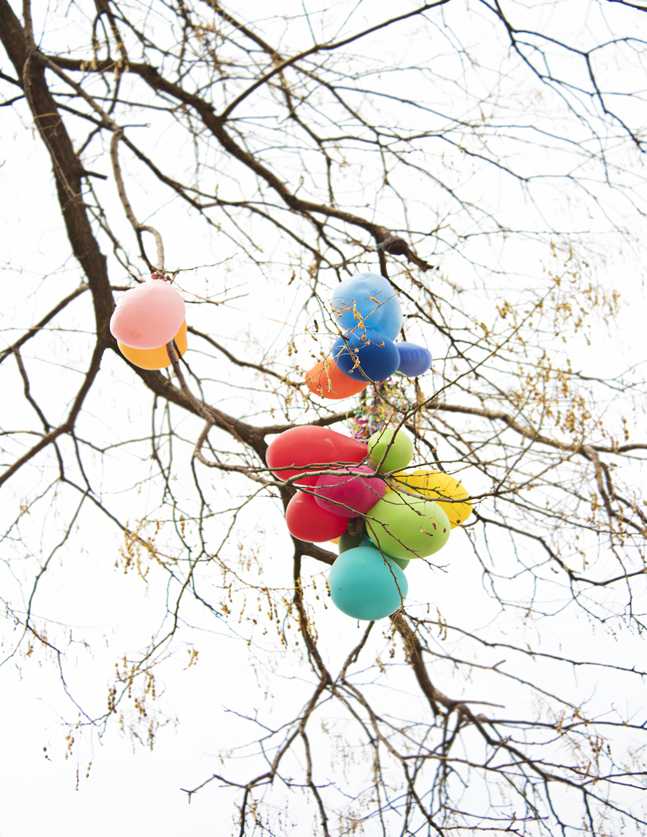 Eileen_Ko_Assignment_4_Balloons_in_Tree_Branches_Blue_Orange_Red_Green_Pink_Yellow