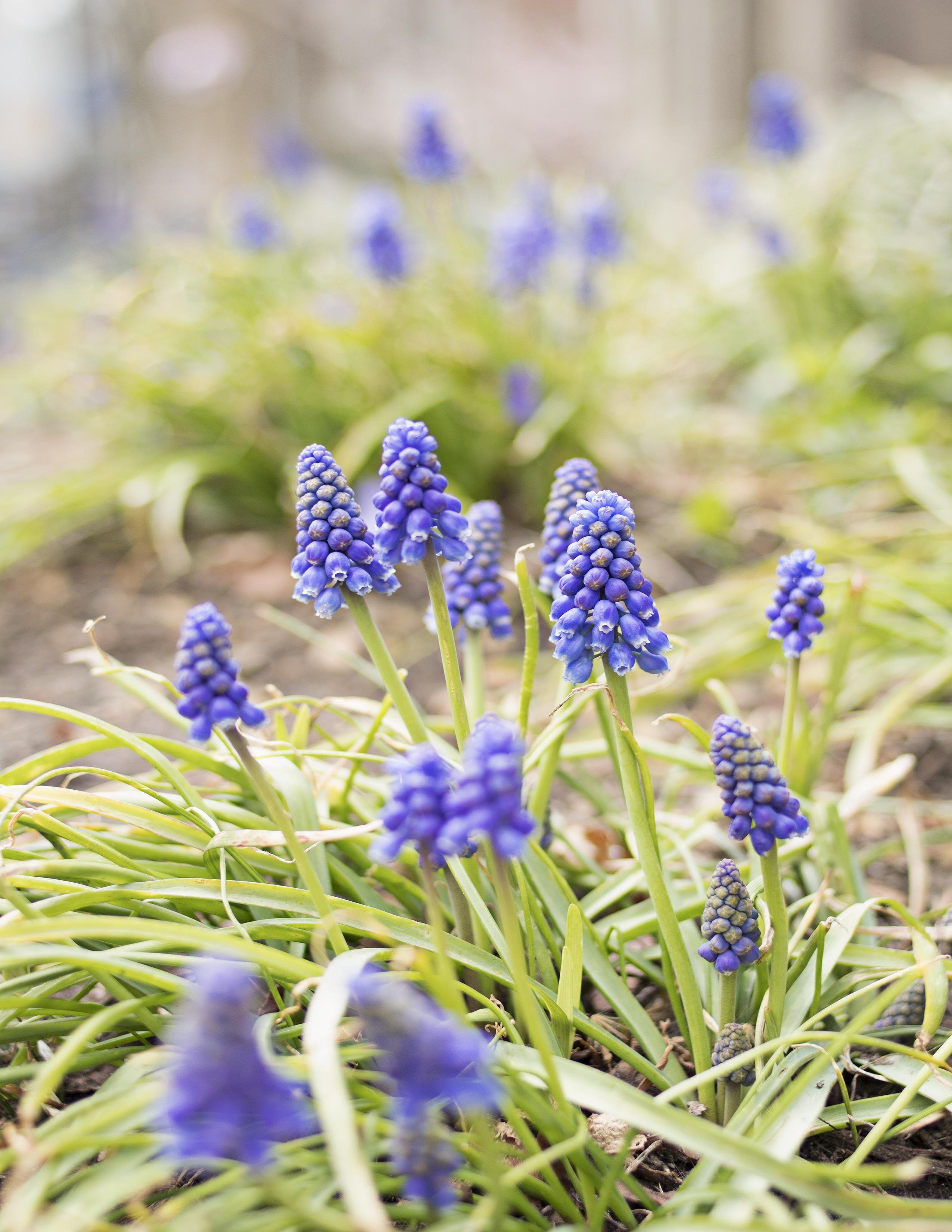 Eileen_Ko_Assignment_4_Little_Purple_Flowers_Bright_Green_Stem