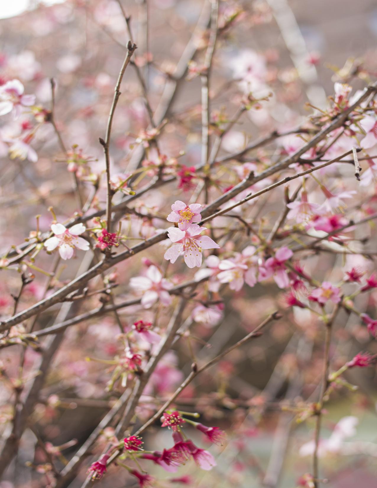 Eileen_Ko_Assignment_4_Pink_Dark_Pink_Flowers_Branches