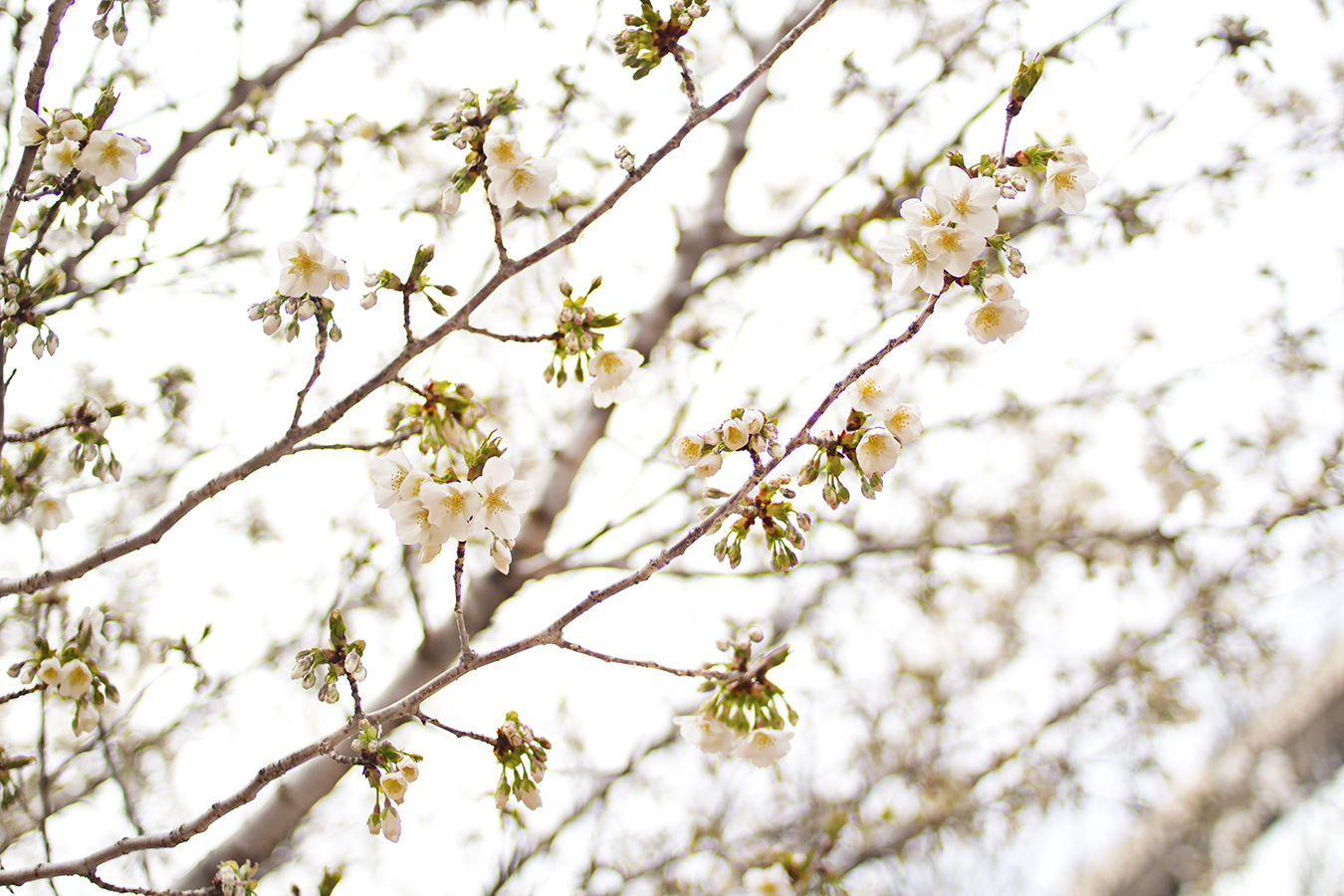 Eileen_Ko_Assignment_4_Small_White_Flowers_in_Tree_Branches