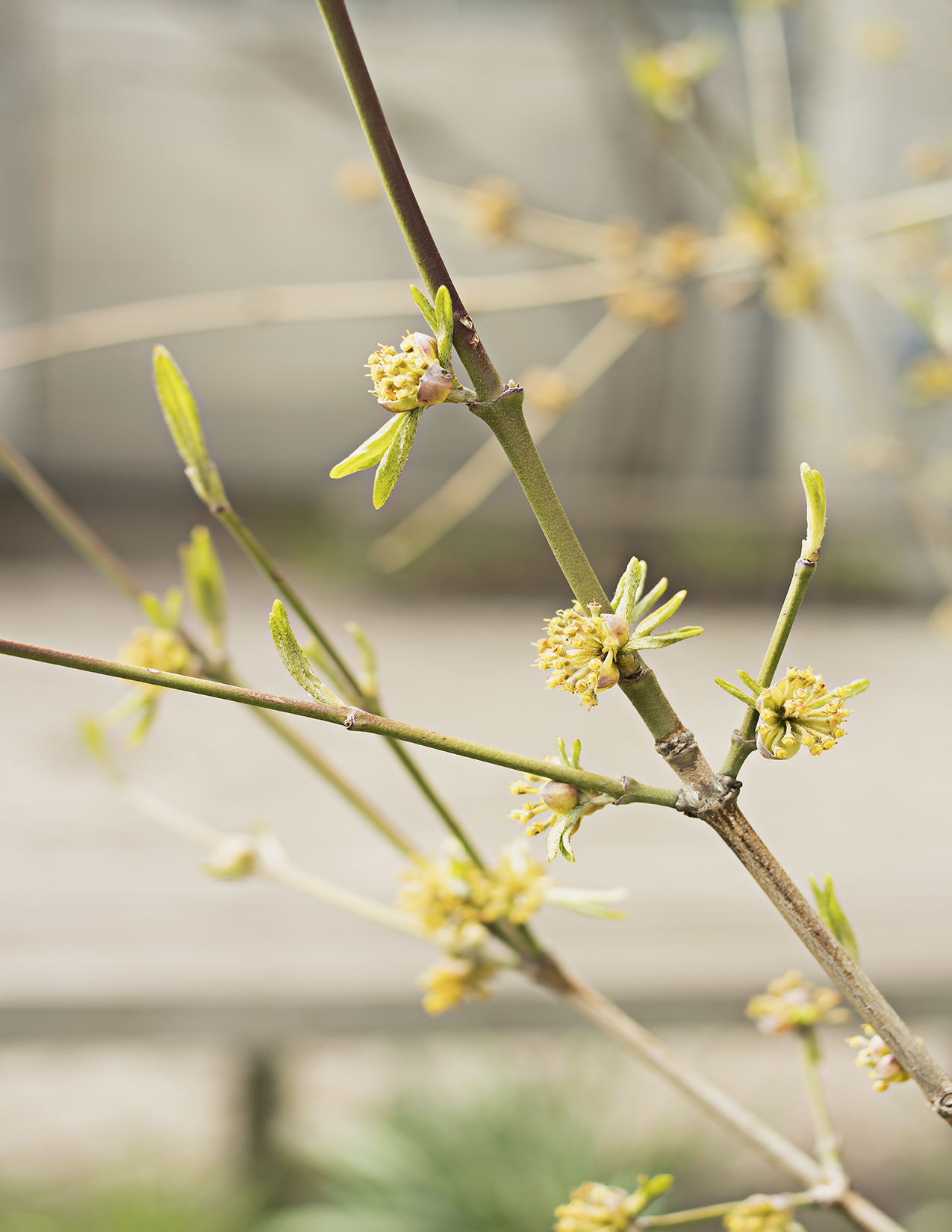 Eileen_Ko_Assignment_4_Thin_Green_Branches_New_Blossoming_Flowers