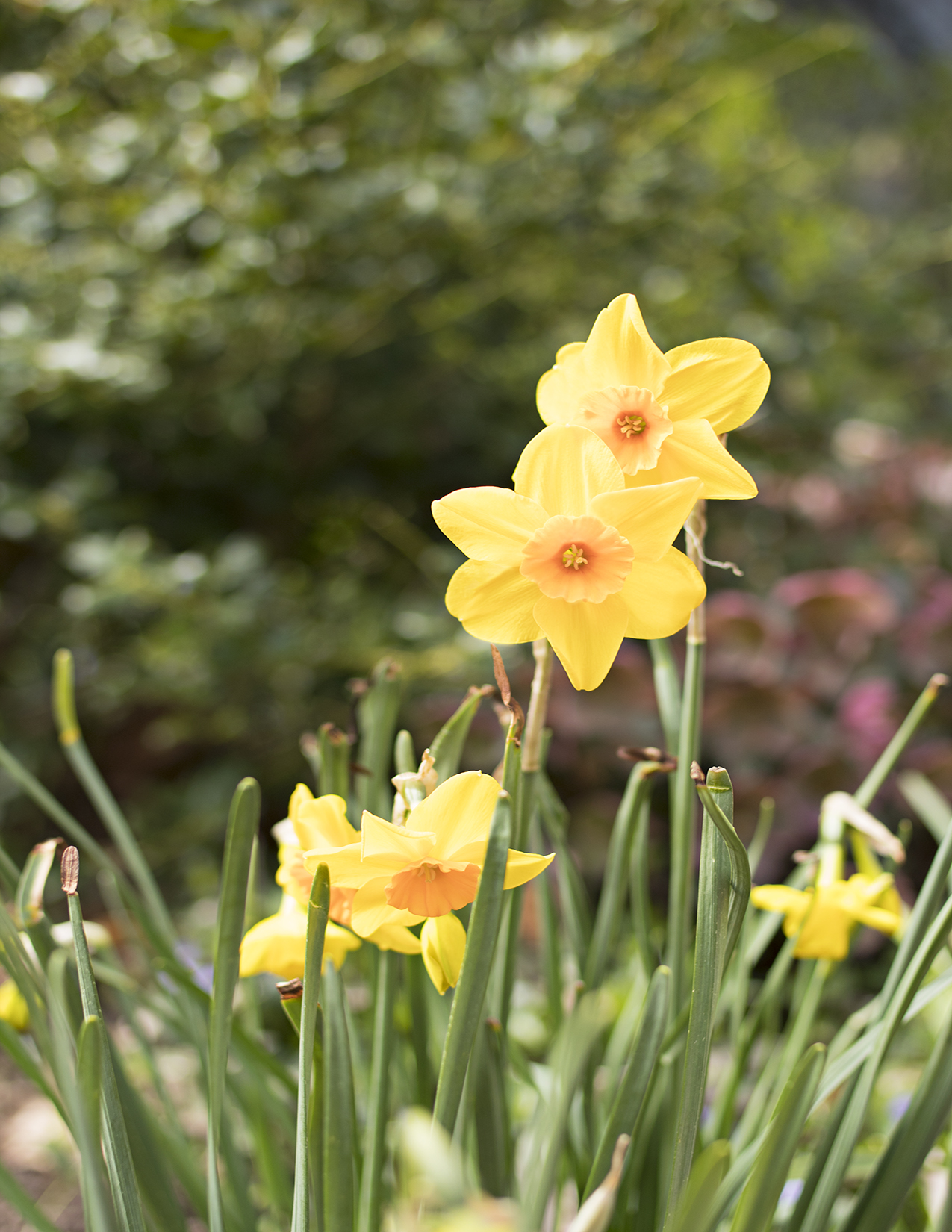 Eileen_Ko_Assignment_4_Two_Yellow_Flowers_Green