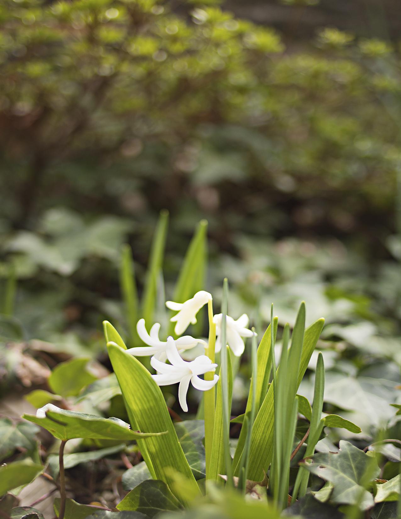 Eileen_Ko_Assignment_4_White_Petal_Flowers
