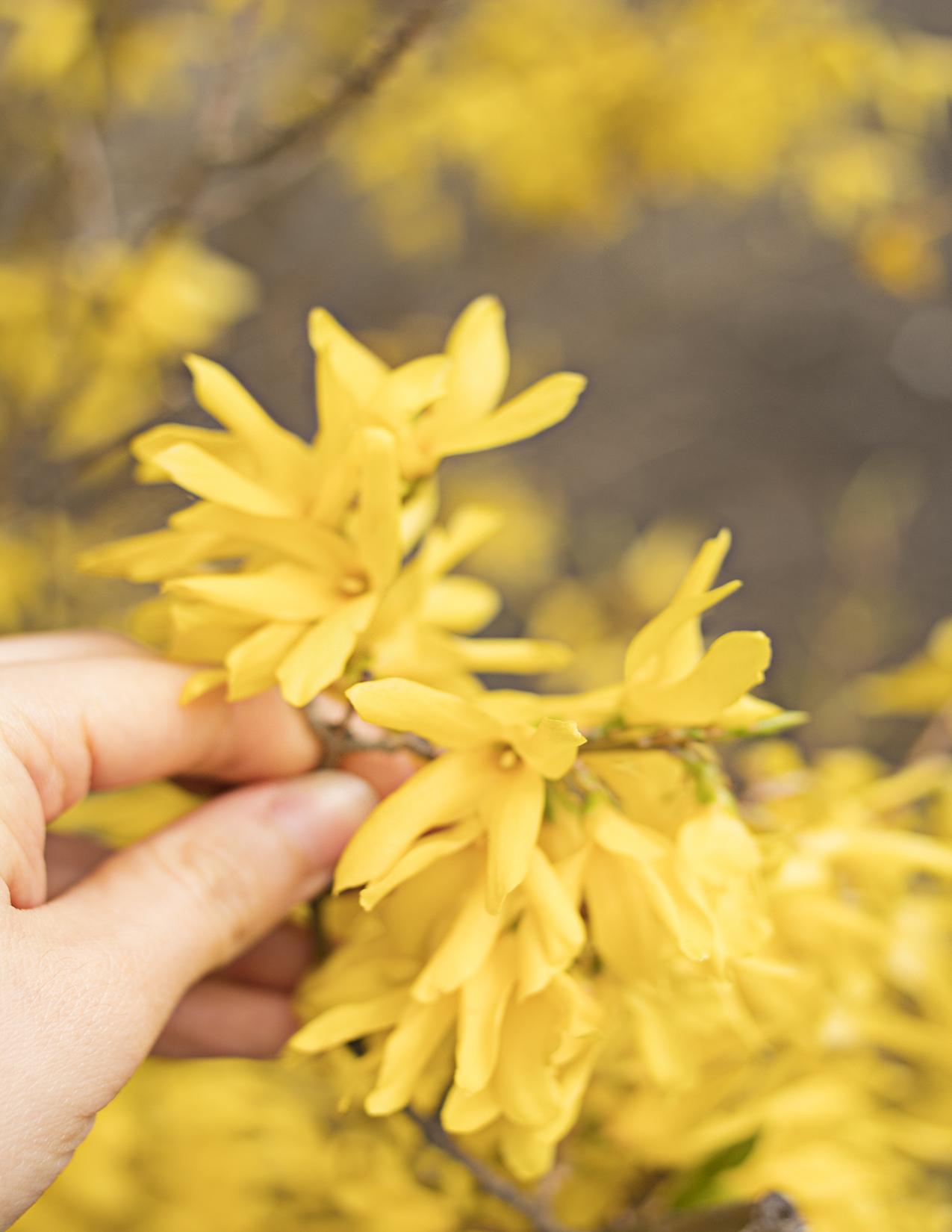 Eileen_Ko_Assignment_4_Yellow_FLowers_Hand