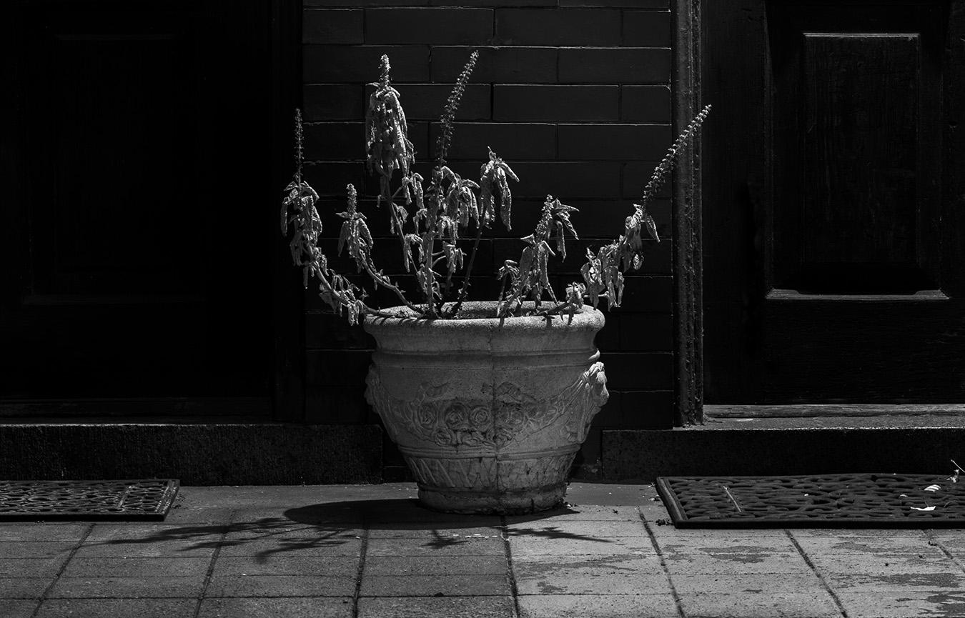 Jesse_Halpern_Still_Life_Porch_Potted_Plant_Night