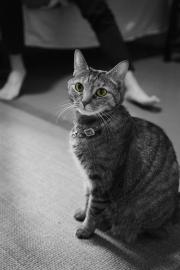 Jinghong_Cui_Erotic_Cat_2