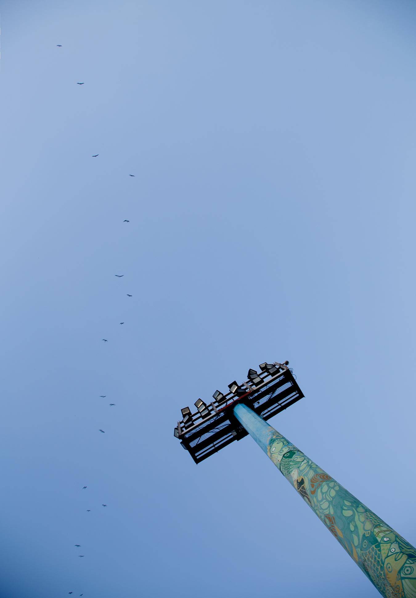 Rongrong Liu_Brazil_Rio De Janeiro_Blue_Tower_Birds_Mininalism