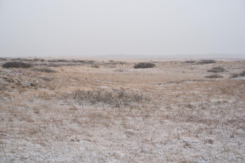 Tina-Iceland-Travel-Winter-Branches-Field-Mist-Fog