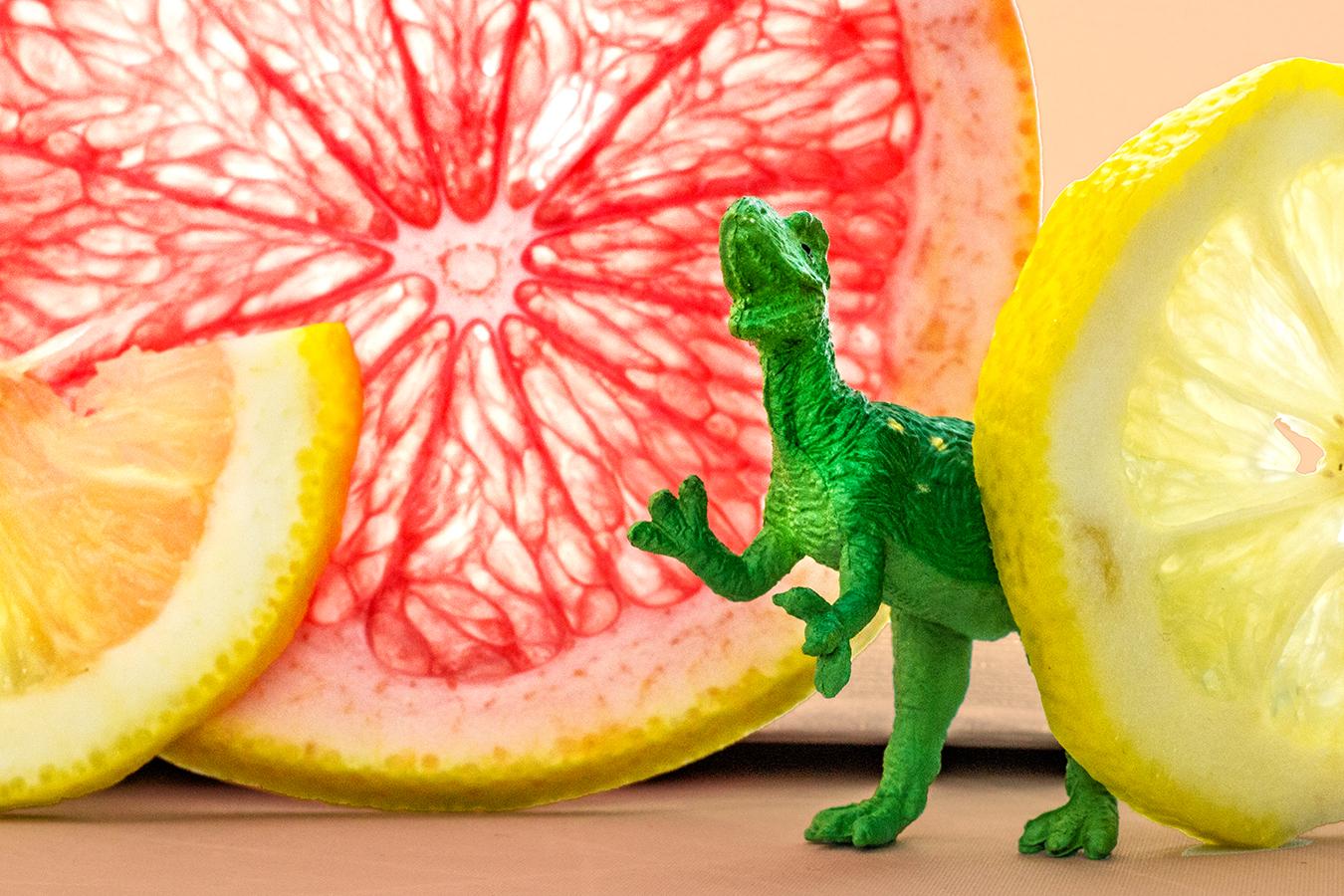 Victoria_Meng_Project2_Dinosaur_Orange_Lemon_Grapefruit_Marco_Colorful_Citrus_TRex_Roar