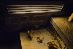 Yash Killa_Philadelphia_Night_Light_Stairs_Leaves2