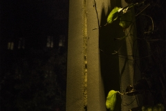 Yash Killa_Philadelphia_Night_Pillar_Light_CLimbers