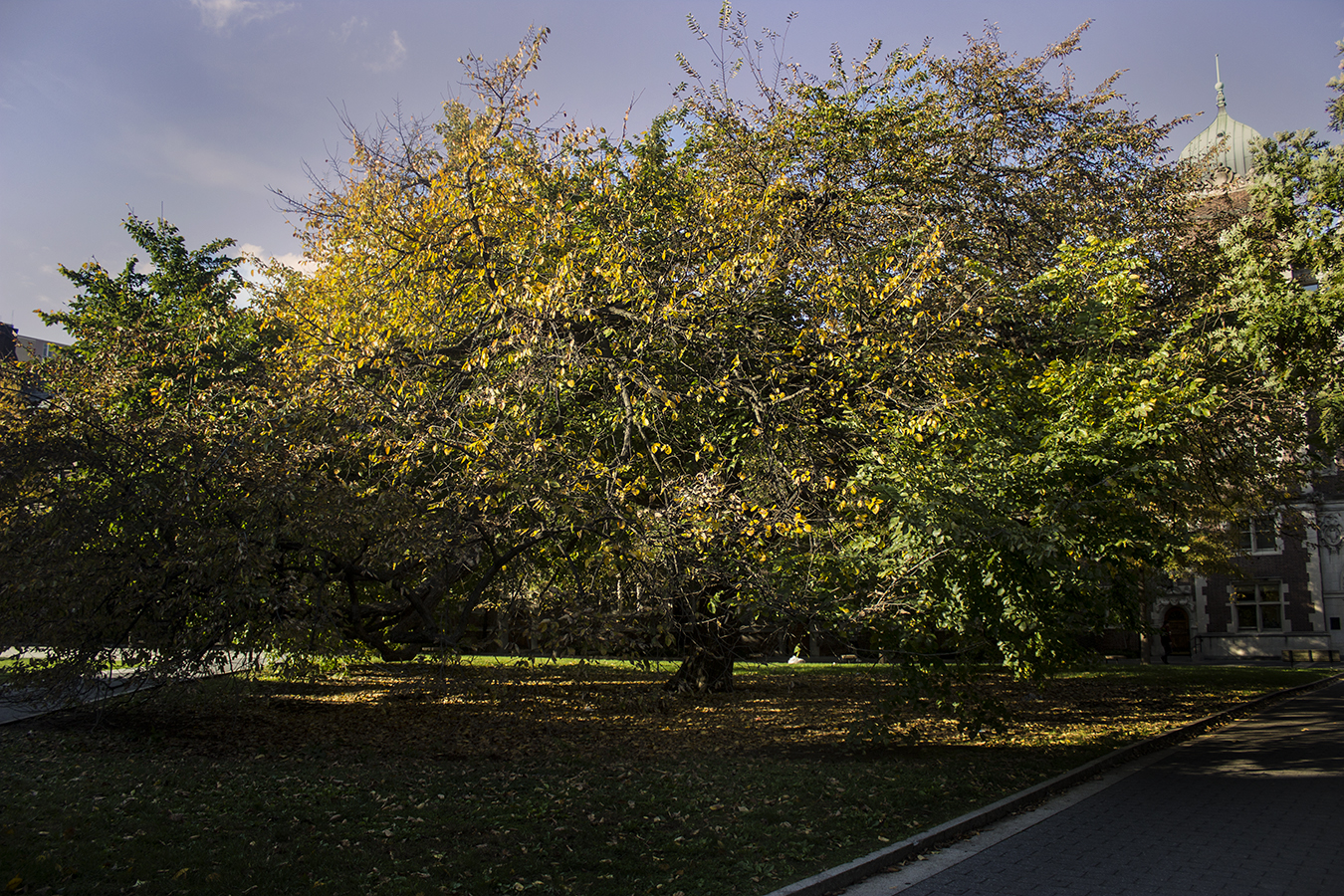 Yash Killa_StillLife_Philadelphia_Pattern_Repetition_Tree_Leaves_Green_Shadow_Spring