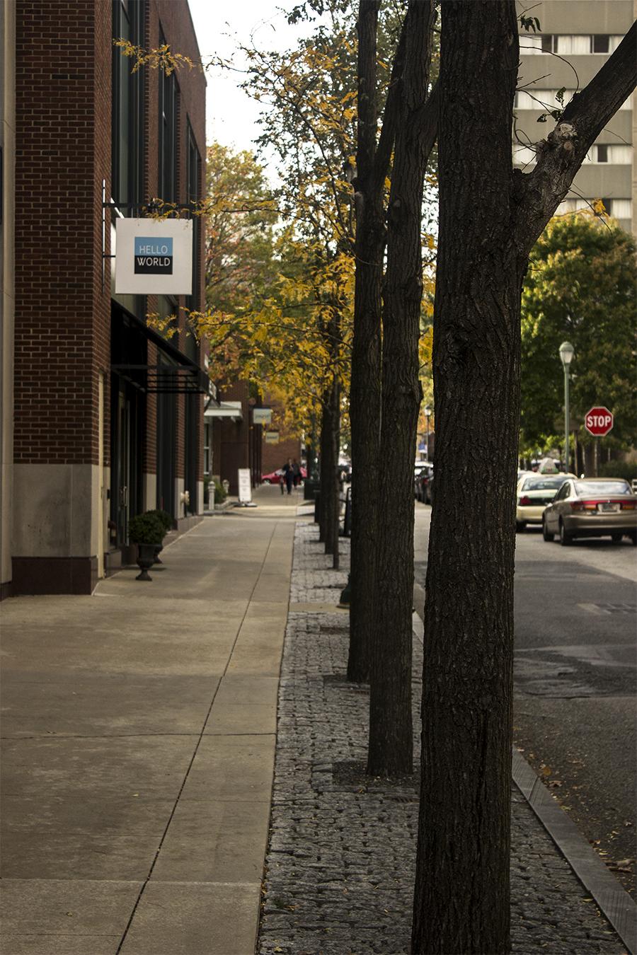 Yash Killa_StillLife_Philadelphia_Pattern_Repetition_Trees_Pavement_streets