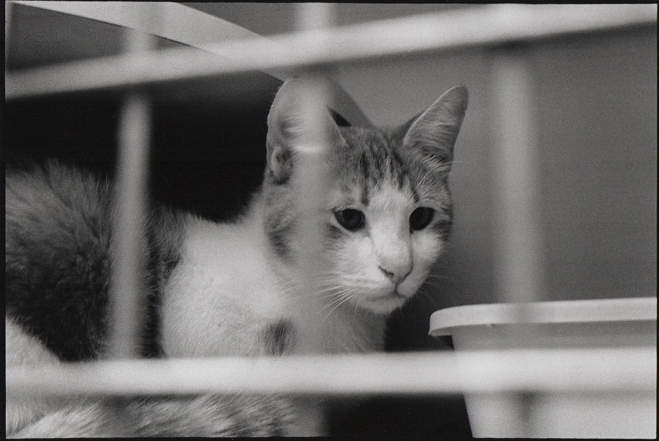 Philadelphia Animal welfare, no kill shelters society,