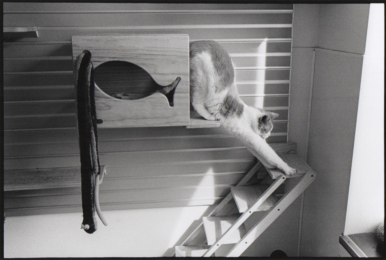 photo of cat at Noble PAWS, Philadelphia
