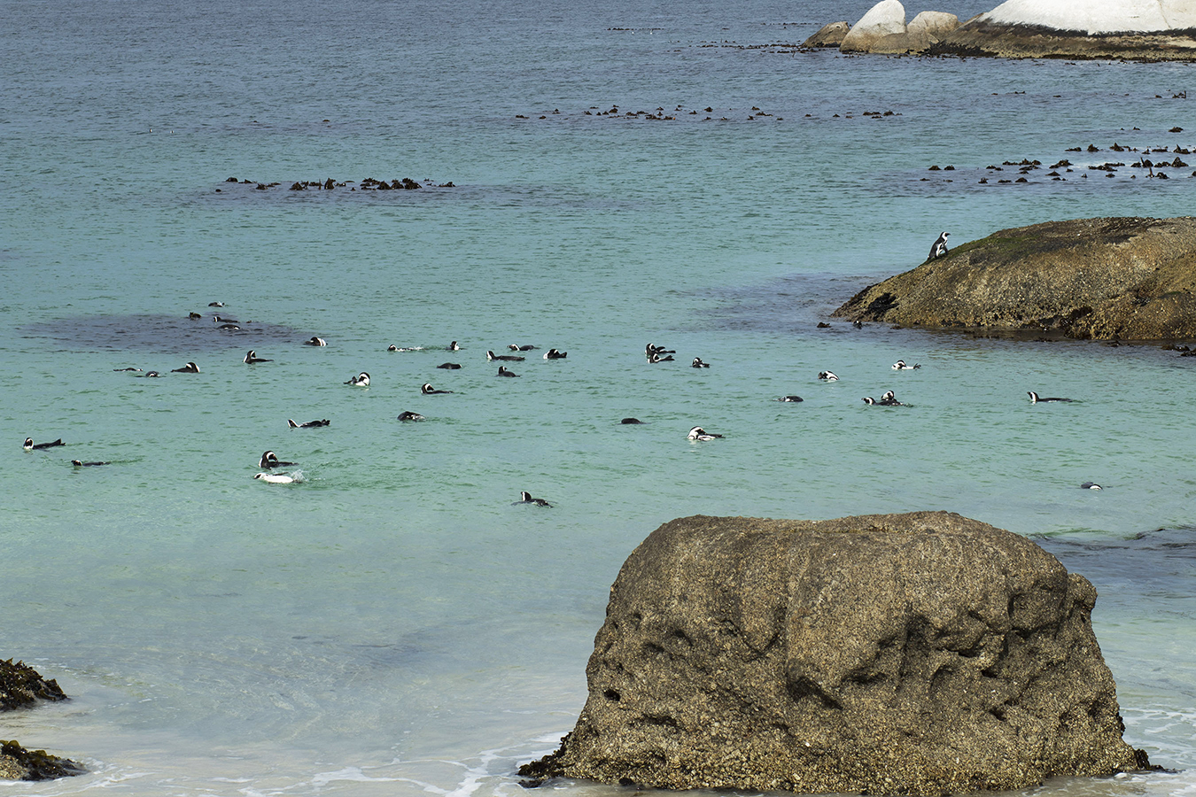 Penguins at the Boulder Beach