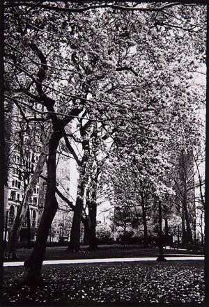 Allison_Dennenberg_Photography_UPenn_Tony_Ward_Studio_blooming_tree_Philadelphia_1.jpg