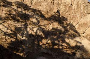 11_JoshuaTree_Tree_Shadow_Rock_Evening.jpg